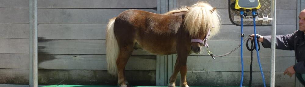 Pony op de Mobiele Paardenweegschaal Three Steps